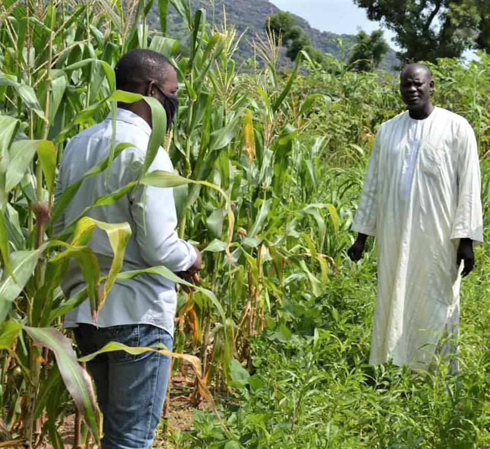 Nigerians stand amid crops on a farm
