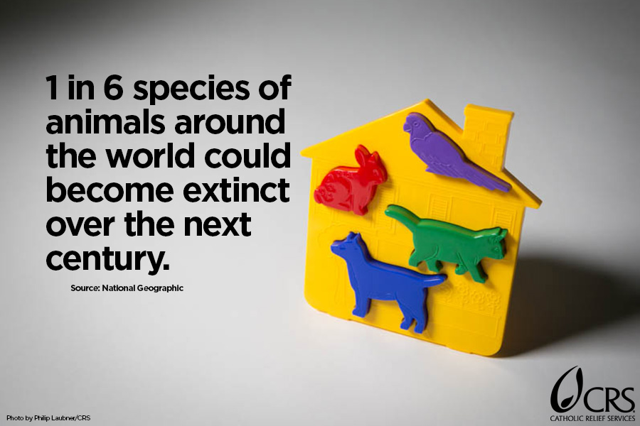 1 in 6 species of animals around the world could become extinct over the next century.