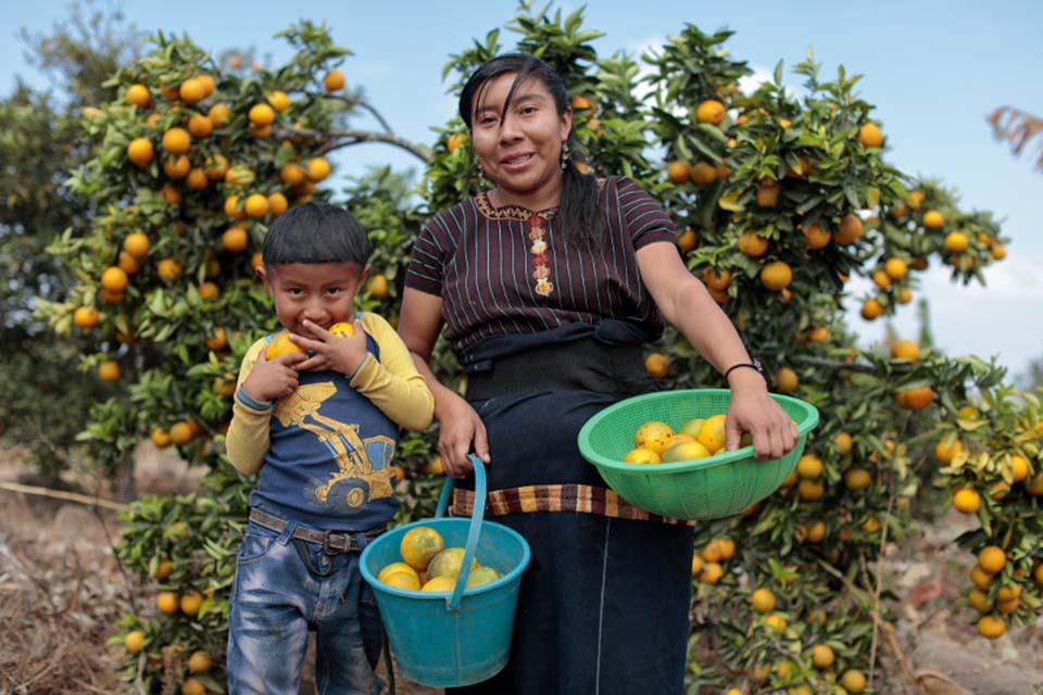 picking oranges in Guatemala