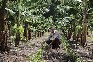 planting in El Salvador