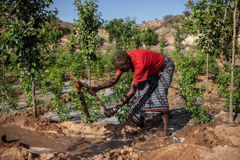 farmer redirects water flow in Ethiopia