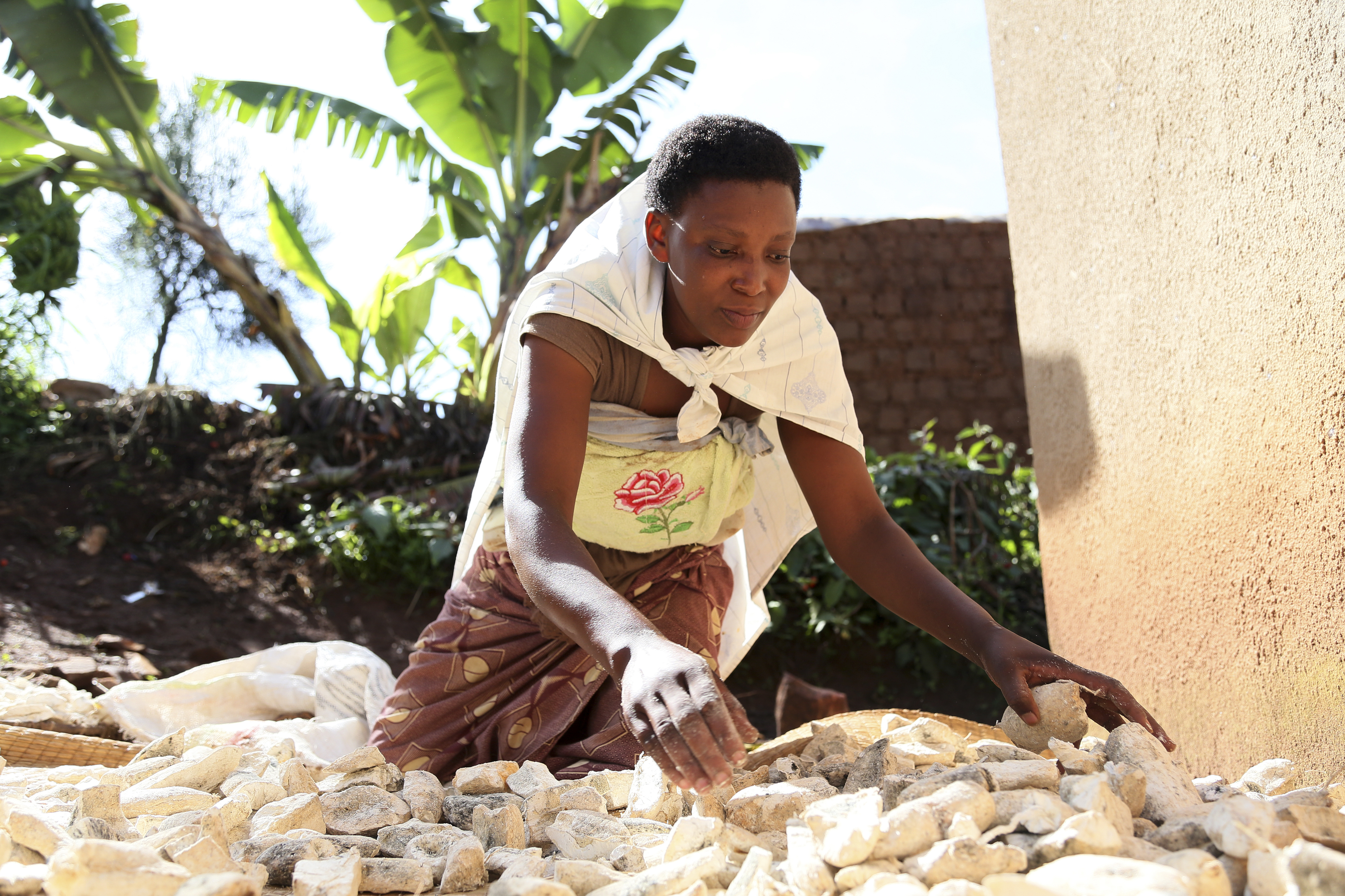 Odette Mukamurenzi is drying cassava, so it can either be sold as cassava chips for animal feed or processed and sold as a flour in the local market. Photo by Michael Stulman/CRS