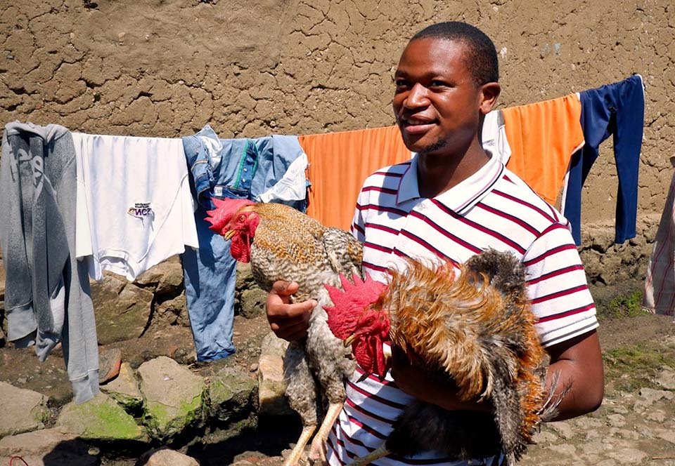 Rwandan holds a pair of prized roosters