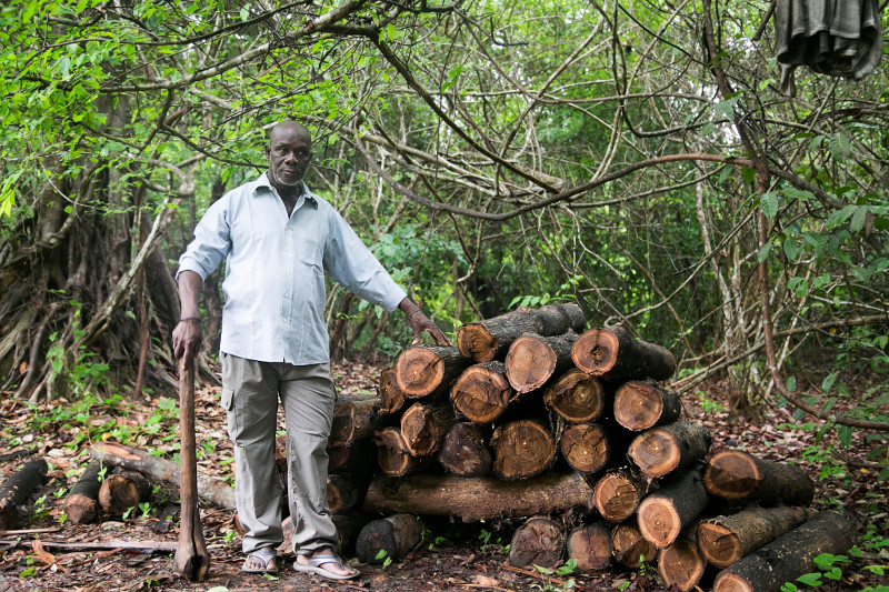 Illegally poached wood damages more than forests—it also affects livelihoods and the future of whole communities. Photo by Michael Stulman/CRS