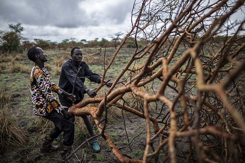 South Sudanese road crew removes tree