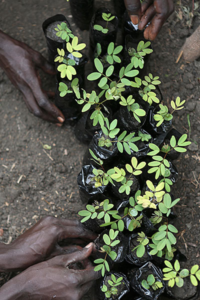 A CRS project is helping South Sudanese farmers relearn skills and gain financial independence through work in a tree seedling nursery. Photo by Sara