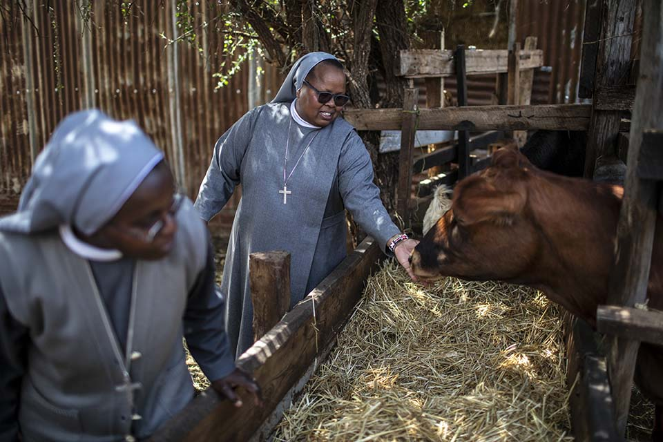tending cattle in Kenya