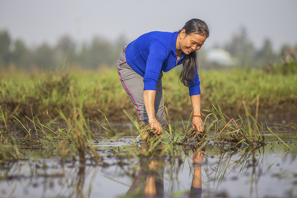 tending crops in Vietnam