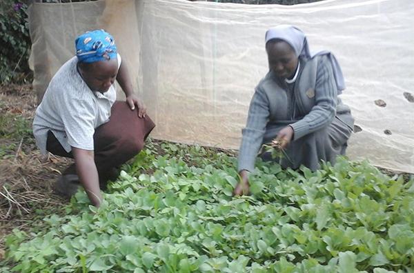 ending Kenya crops