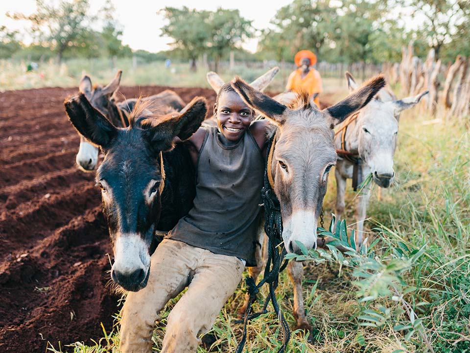 tilling a Zimbabwe field