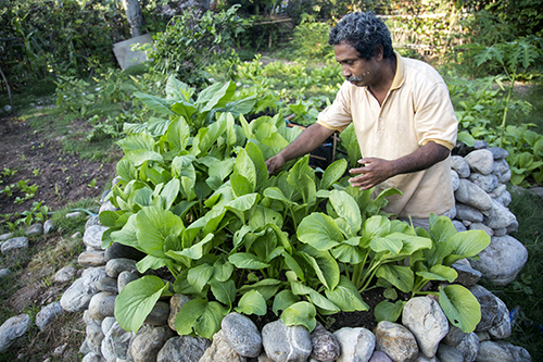 CRS support teaches new ways to grow maize with limited water.