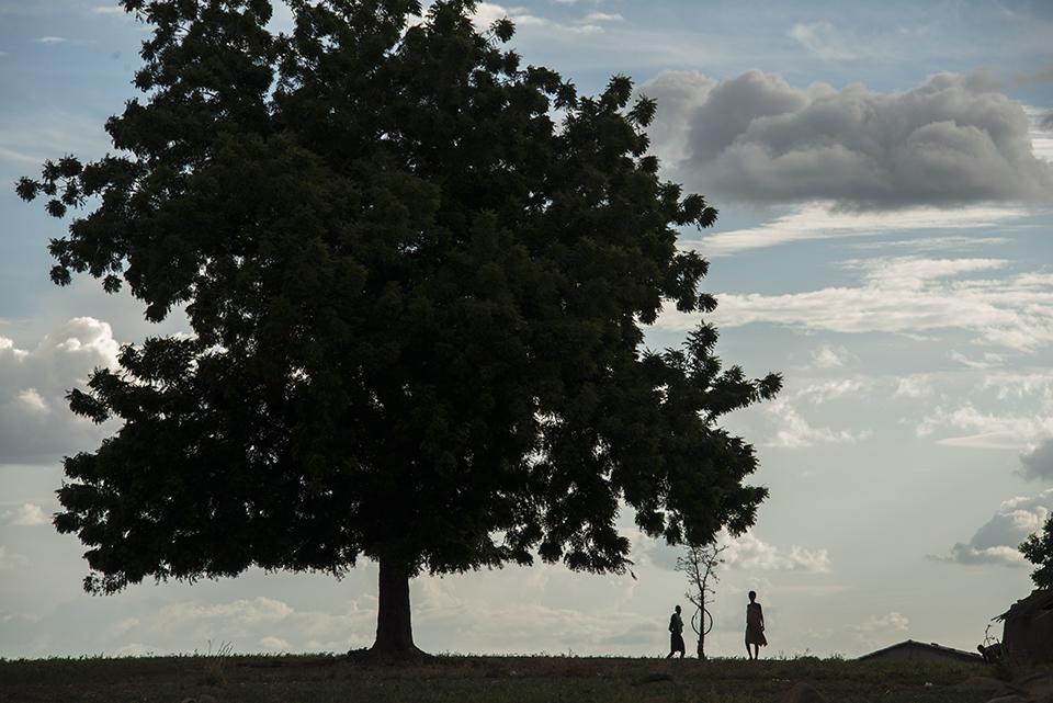 tree in Ghana