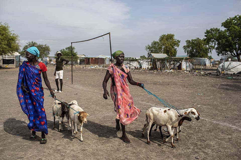 two South Sudanese women walk home with new goats