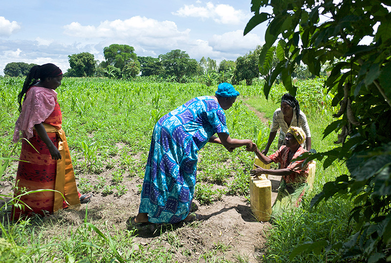 Farmer-to-Farmer volunteer Velma Gwishiri, second from left, examines the groundnut and maize field of Nakitende Maimuna, left, as two neighbors approach. Ric Francis for CRS