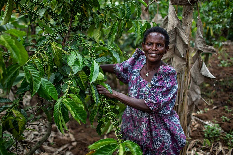Uganda farmer shows off a coffee plant