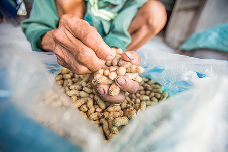 Another Binh Dao commune farmer, Vo Hoang Luan, reported his groundnut crop could deliver 70% more revenue thanks to the project's TSG-delivered livelihood trainings.