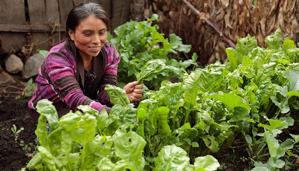 woman tends garden in Guatemala