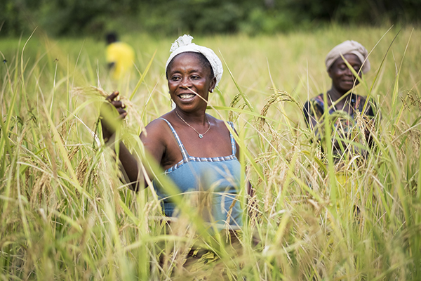 woman in rice field in Sierra Leone