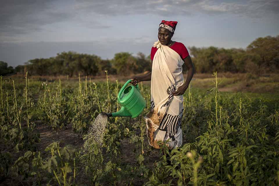 woman waters crops in South Sudan