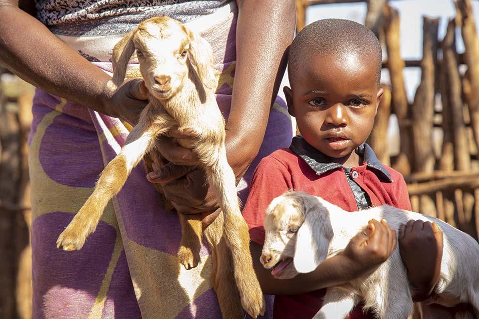 Zimbabwe child holds a goat