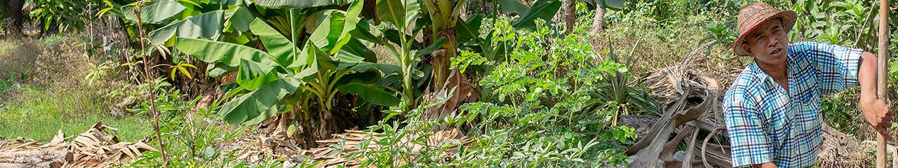 Myanmar food security
