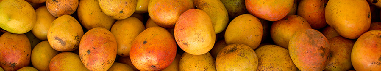 mangoes ready for drying in Malawi, Africa