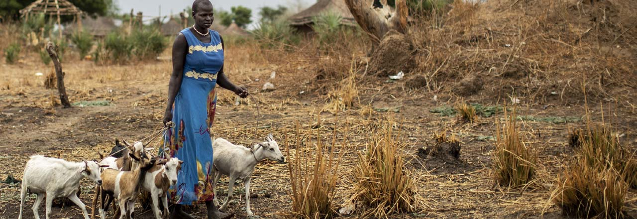 woman tends goats in South Sudan
