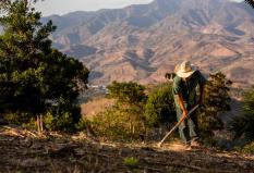 Guatemalan man farming in a field