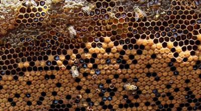 beekeeping in Nicaragua
