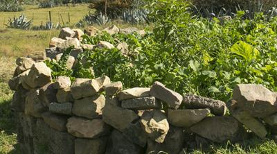 keyhole garden in Lesotho aids family nutrition