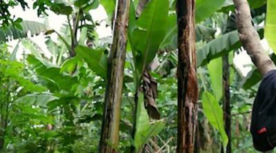 using a hand plane in Rwanda