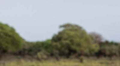 woman facing camera in South Sudan