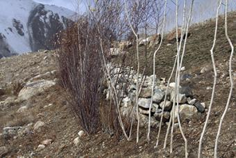 This stone wall and the adjacent saplings are an example of the natural resource management work CRS has carried out in Afghanistan's Central Highlands. The wall protects the land from soil erosion, and the saplings reinforce the wall and provide fodder f