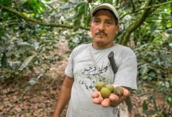 Farmers are branching out with new crops. Carlos grows macadamia, but there are others who grow bananas or avocados. It's a way to earn extra money in uncertain times. Photo by Philip Laubner/CRS