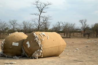 These bales of cotton were left abandoned in 2011, when the cotton industry collapsed in Zimbabwe. Many cotton farmers tried to grow maize instead, but the increasingly hot, dry climate is no longer suitable for it. Photo by Nancy McNally/CRS