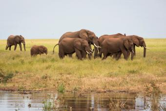 Elephants graze near the shores of Lake Kariba. Visitors come to the lake for fishing and to see wildlife, but after several years of drought, combined with the effect of El Nino, the level of the lake has decreased. Photo by Elie Gardner for CRS