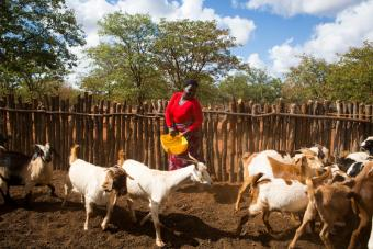 The Shumani goat production group in Fula Village, Beitbridge, is a group of seven women and three men who raise goats together. Photo by Elie Gardner for CRS