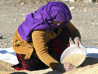 An Afghan woman sifts wheat seeds. CRS' natural resource management work  protects the harvests of hundreds of wheat farmers throughout Afghanistan. Photo by Nikki Gamer/CRS