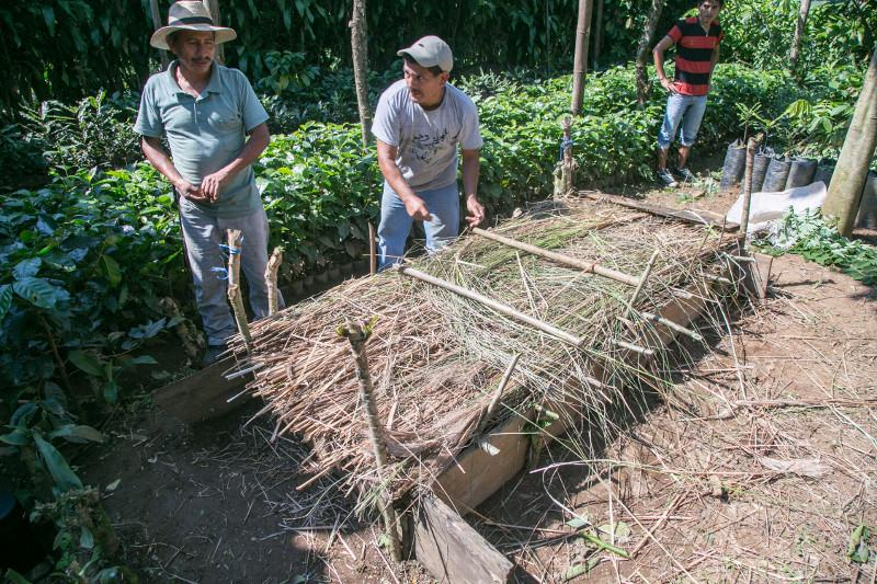 Farmers protect the soil through shade and experiment with ways to capture more water. Photo by Philip Laubner/CRS