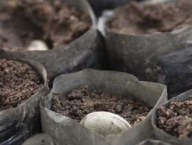 Benin cashew producer