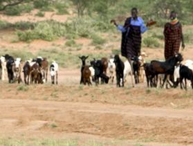 goatherders in Kenya