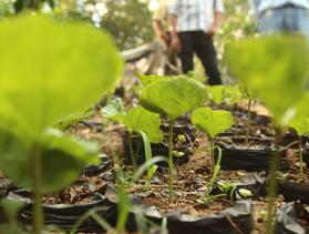The Ramirez family has a seedbed for coffee and other vegetables. Photo by Oscar Leiva/Silverlight for CRS