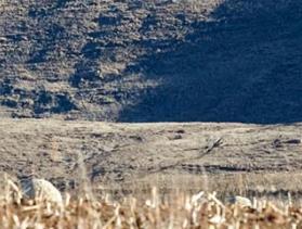 Lesotho field