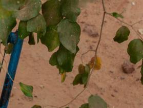 Mali displaced woman