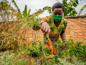 woman pulling a carrot from her garden in Rwanda